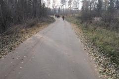 Jezioro Rajgrodzkie 6.11.2011r (22)