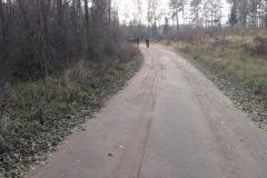 Jezioro Rajgrodzkie 6.11.2011r (23)
