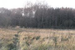 Jezioro Rajgrodzkie 6.11.2011r (32)