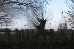 Jezioro Rajgrodzkie 6.11.2011r (45)