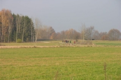 Jezioro Rajgrodzkie 6.11.2011r (84)