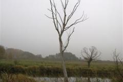 wycieczka-nad-biebrze-kopytkowo-2012-25